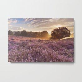 I - Blooming heather at sunrise, Posbank, The Netherlands Metal Print