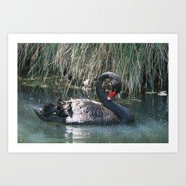 The Black Swan Art Print