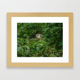 Groggy Groundhog Framed Art Print