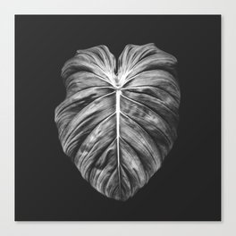Monstera Deliciosa Black and White Canvas Print