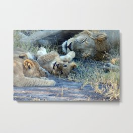 Playful Lion Cub Metal Print