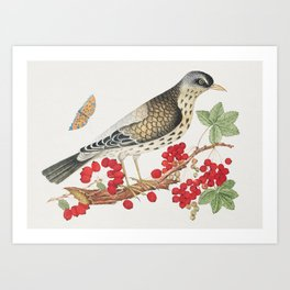 The 18th century  of a brown bird on a branch with persimmons and a butterfly Art Print