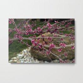 Eastern Redbud Branch Metal Print