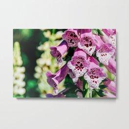Pink Digitalis Foxgloves Plant Flowers In Garden Metal Print