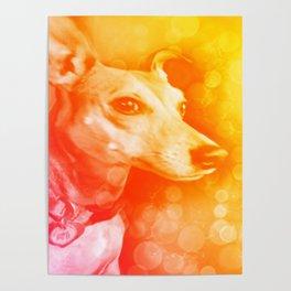 Kanga, the brightest light Poster