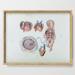 Vintage Anatomy of a Human Infant in Womb Serving Tray