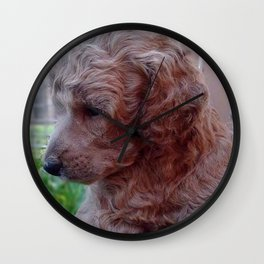 Charly,poodle baby Wall Clock
