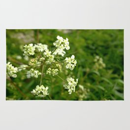 White Water Hemlock Rug