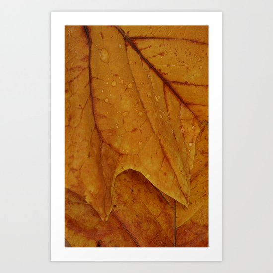 American Tulip Poplar Leaves Art Print