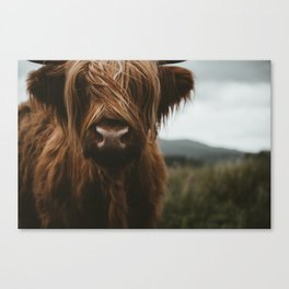 Scottish Highland Cattle Canvas Print