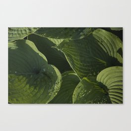Hosta After a Rain Canvas Print