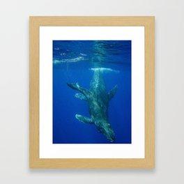 Underwater Humpbacks 11 Framed Art Print
