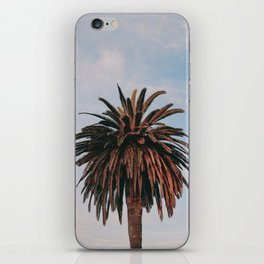 Solo Palm Tree | Venice Beach, California iPhone Skin
