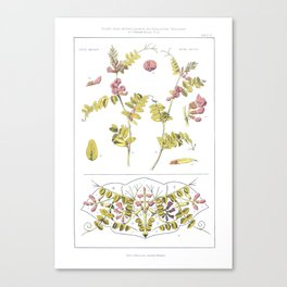 Vica Sepium Plants Old Etching Canvas Print