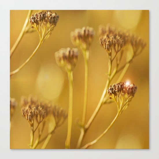 Autumn wildflowers in forest Canvas Print