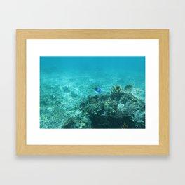 Dory (Blue Tang) Framed Art Print