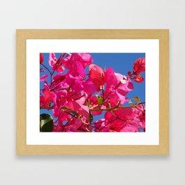 Bougainville in pink Framed Art Print