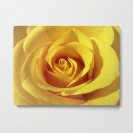 yellow rose macro XI Metal Print