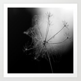 Black and White Cobweb Art Print