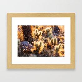 Cacti Medley Framed Art Print