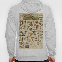 Vintage sealife and seashell illustration Hoody