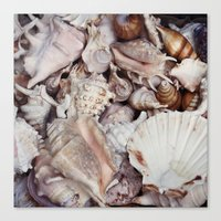 seashell Canvas Prints featuring seashell by Pink Revenge
