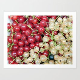 Berry currant harvesting Art Print