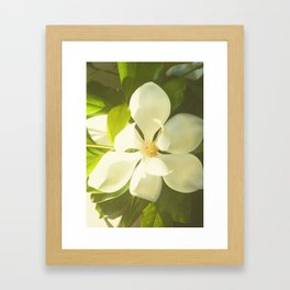 Vintage magnolia Framed Art Print