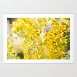 Sunshine & Flowers Art Print