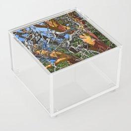 MADRONA TREE DEAD OR ALIVE Acrylic Box