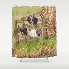 Countryside farm sheep dogs Shower Curtain