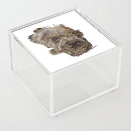 Bear Acrylic Box