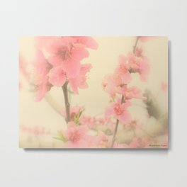 Southern Peach Orchard ~ Peach Blossoms Metal Print