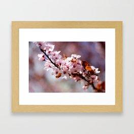 Cherryblossom Framed Art Print