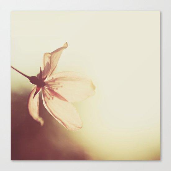 blossoms morning light Canvas Print