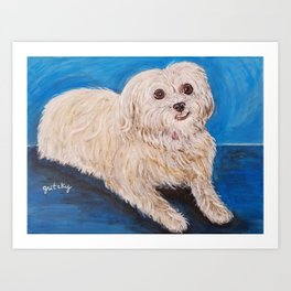 Shih Tzu Maltese Mix Dog Portrait Art Print