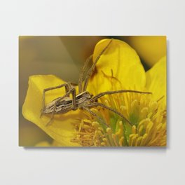Nursery Web Spider Metal Print
