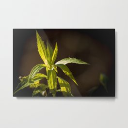 Chilling In The Sun Metal Print