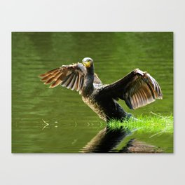 Cormorant flight Canvas Print