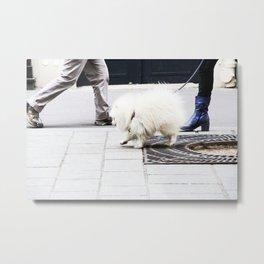 Dog walk Metal Print