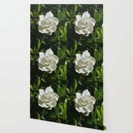 Gardenia White Flower Photograph Wallpaper
