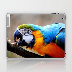 Ara Laptop & iPad Skin