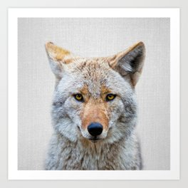 Coyote - Colorful Art Print