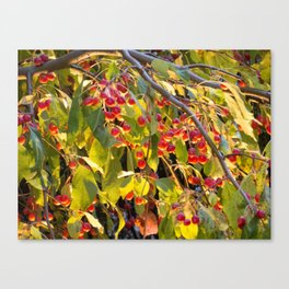 Bright red berries on a tree Canvas Print