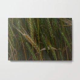 Waving Wheat Metal Print