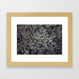 Green Lichen Framed Art Print