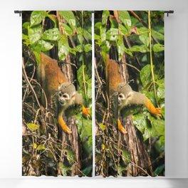 Capuchin monkey Blackout Curtain