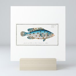Spotted Scat (Argus) Fish Chart Identification Illustration portrait by Marcus Elieser Bloch Mini Art Print