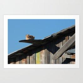 Walk the plank ye kitty Art Print