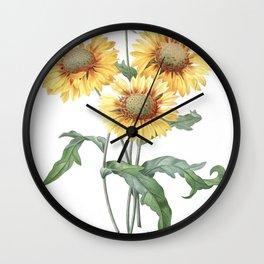 HIGHEST QUALITY botanical poster of Galardia Rustica Wall Clock